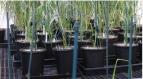 Nhựa sinh học từ thực vật an toàn với môi trường
